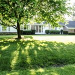 House with shade tree: Richmonds Energy Savings Blog