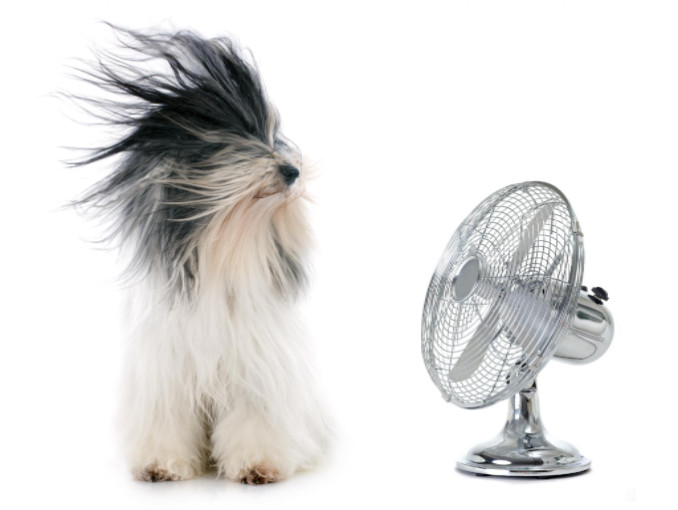 dog and fan: Richmond's Air Home Air Quality: Humidifiers, Dehumidifiers, and Air Purifiers blog