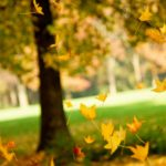 Don't Let Autumn Leaves Get Into Your HVAC System