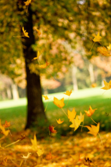 falling leaves: Preventative Maintenance